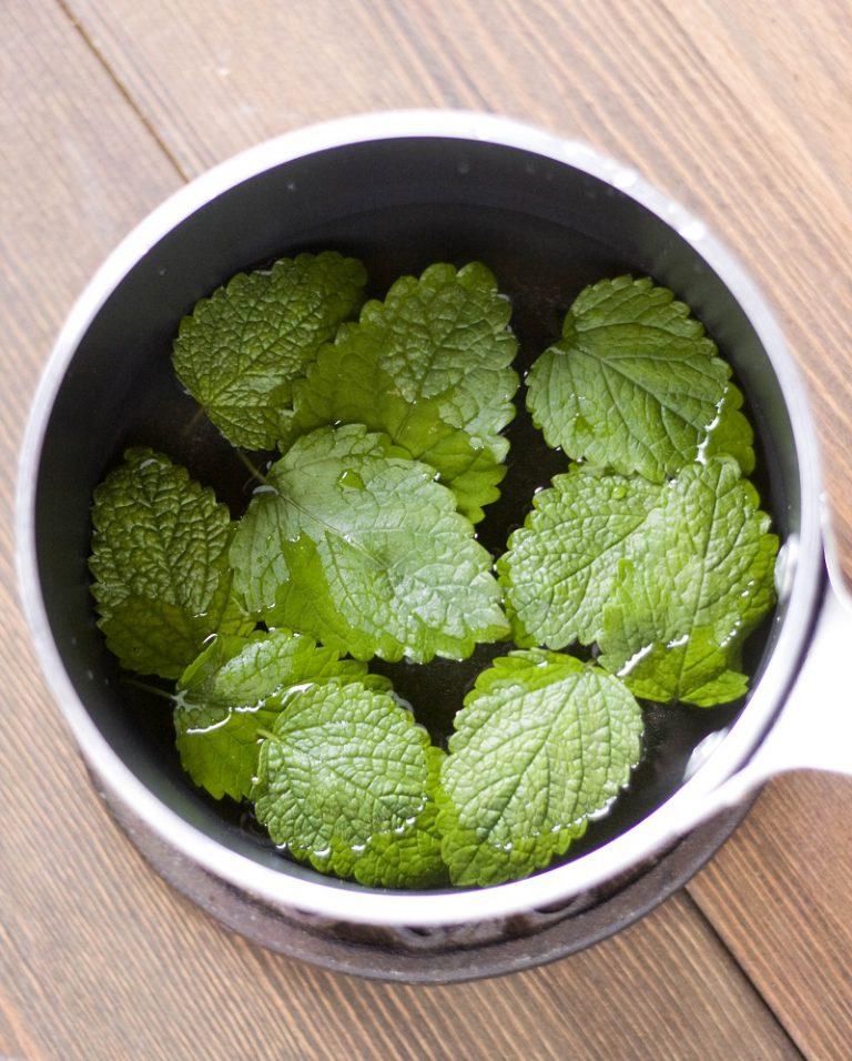 In un pentolino mettete a bollire l'acqua con le foglie di melissa e lasciate in infusione per una decina di minuti, fate poi raffreddare.