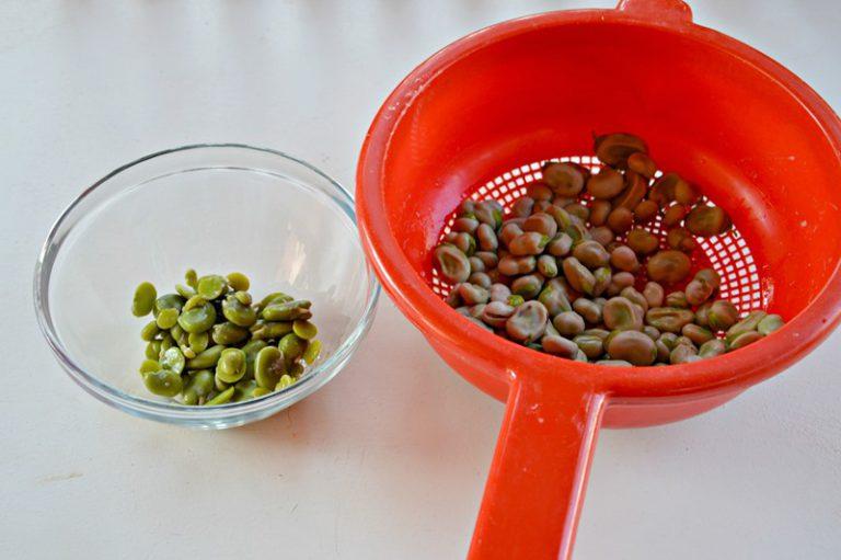 Scottate le fave in acqua bollente, per 15 minuti, eliminate la pelle. Ponetele dentro un'insalatiera. Aggiungete alle fave, i pomodorini, l'insalata mista