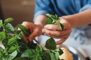 come-usare-le-erbe-aromatiche-in-cucina-mano-che-raccoglie-basilico-menta